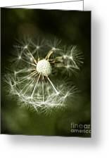 Blown Dandelion Greeting Card