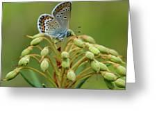 Blue 3 Greeting Card