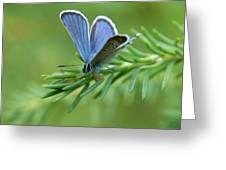 Blue 5 Greeting Card