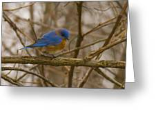 Blue Bird Perched On Willow Greeting Card