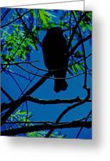 Blue-black-bird Greeting Card by Todd Sherlock