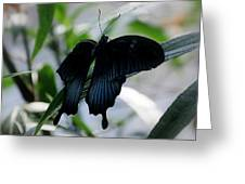 Blue-black Butterfly Greeting Card