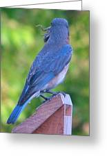 Blue Boy My Yard Bird Greeting Card