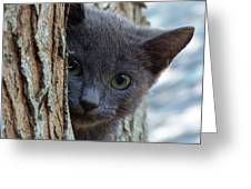Russian Blue,cat  Greeting Card