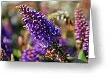 Blue Brush Bloom Greeting Card