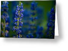 Blue Bunny Greeting Card