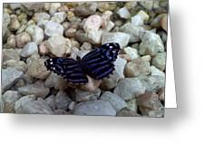 Blue Butterfly On The Rocks Greeting Card