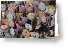 Blue Cactus Greeting Card