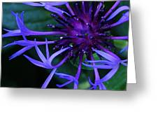 Blue Centaurea Amethyst Greeting Card