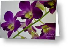 Blue Charm X Aridang Blue Orchid - 3 Greeting Card