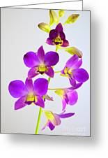 Blue Charm X Aridang Blue Orchid - 1 Greeting Card