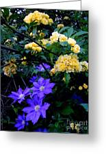 Blue Clematis With Yellow Lady Banks Rose Greeting Card