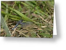Blue Corporal Dragonfly Greeting Card