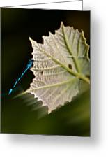 Blue Damsel On Leaf Greeting Card