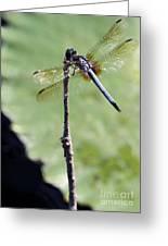 Blue Dasher Dragonfly Dancer Greeting Card