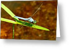 Blue Dasher Dragonfly Greeting Card