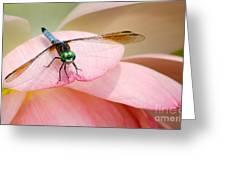 Blue Dasher On A Pink Lotus Greeting Card