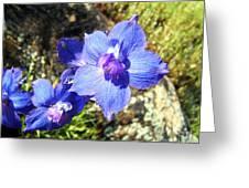 Blue Delphinium Flower Photograph Greeting Card