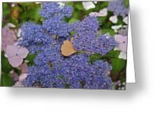 Blue Dot Greeting Card