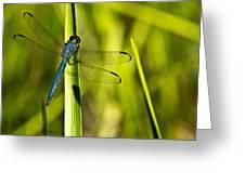 Blue Dragonfly 1 Greeting Card