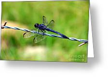 Blue Dragonfly On Barb Wire Greeting Card
