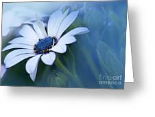 Blue Eyed African Daisy Greeting Card