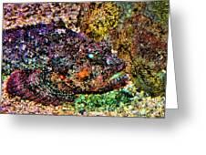 Blue Eyed Fish Greeting Card