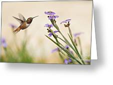 Blue-eyed Grass Wildflowers And Rufous Hummingbird Greeting Card