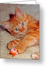 Blue-eyed Kitty Greeting Card