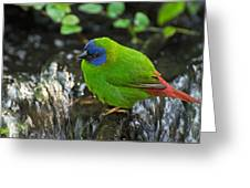Blue Faced Parrot Finch Greeting Card