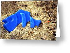 Blue Fish Swims In Sand Sea Greeting Card