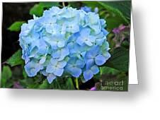 Blue Garden Flower Greeting Card