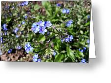 Blue Forget Me Not Greeting Card