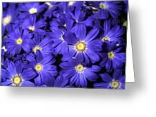 Blue Gerber Greeting Card by Al Hurley