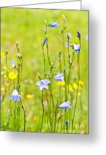 Blue Harebells Wildflowers Greeting Card