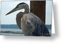 Blue Heron 2 Greeting Card