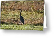 Blue Heron At Valley Forge Greeting Card