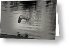 Blue Heron In Platinum Greeting Card
