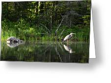 Blue Heron Long Pond Wmnf Greeting Card