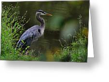 Blue Heron Observing Pond - 6955k Greeting Card