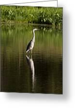 Blue Heron Reflection Greeting Card