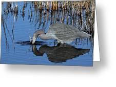 Blue Heron Splash Greeting Card