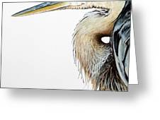 Blue Heron Study Greeting Card