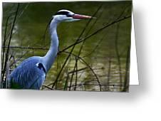 Blue Heron Vondelpark Amsterdam Greeting Card