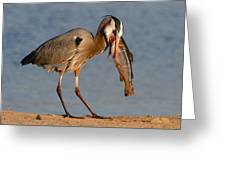 Blue Heron Vs. Rainbow Trout Greeting Card