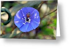 Blue Honey Bee Flower Greeting Card
