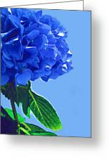 Blue Hortensia Hydrangea Greeting Card