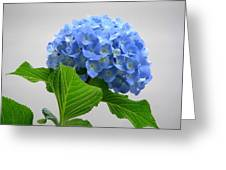 Blue Hydrangea Greeting Card