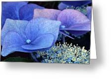 Blue Hydrangea. Greeting Card