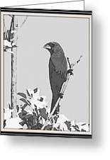 Blue In Black And White Greeting Card